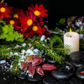 Winter spa still life of evergreen branches, leaves with drops, — Stock Photo