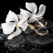 Beautiful cryogenic spa concept of delicate white hibiscus, zen  — 图库照片