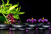 Beautiful spa setting of zen basalt stones with drops, lilac can — Stock Photo