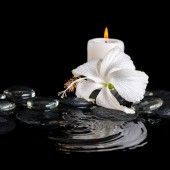 Beautiful cryogenic spa concept of delicate white hibiscus, zen  — Stockfoto