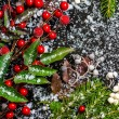 Winter card of evergreen branches, red leaves and berry with sno — Stock Photo #60214839