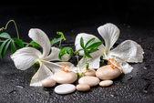 Bellissima spa still life di ibisco bianco delicato, ramoscello passio — Foto Stock