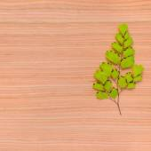 Natural texture of tree background with framed branch fern — Stock Photo