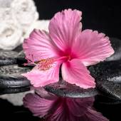 Spa concept of delicate pink hibiscus  with drops and white stac — Stock Photo