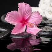 Still life of pink hibiscus flower with drops and white towels o — Stock Photo