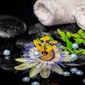 Spa concept of passiflora flower, branch fern, towels, zen basal — Stock Photo