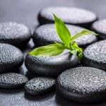 Beautiful spa concept of green branch bamboo on zen basalt stone — Stock Photo #61383855