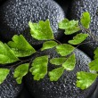 Beautiful spa concept of green twig Adiantum fern on zen basalt  — Stock Photo #61383895