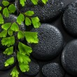 Beautiful spa concept of green twig Adiantum fern on zen basalt  — Stock Photo #61383915