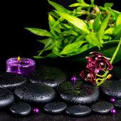 Spa concept of flower orchid, phalaenopsis, zen basalt stones wi — Stock Photo