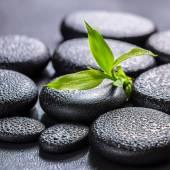 Concetto di splendida spa di bambù verde ramo su pietra di basalto di zen — Foto Stock