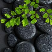 Beautiful spa concept of green twig Adiantum fern on zen basalt  — Stock Photo