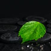Beautiful spa background of green leaf hibiscus on zen basalt st — Stock Photo