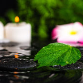 Spa concept of green leaf hibiscus, plumeria with drops and cand — Стоковое фото