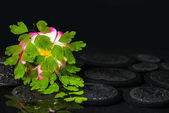 Spa concept of green branch Adiantum fern, plumeria flower with — Stock Photo