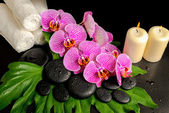 Spa background of zen stones with dew, blooming twig stripped vi — Stock Photo