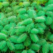 Exotic green leaves on the wall background, India — Stock Photo