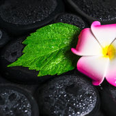 Spa concept of green leaf hibiscus, plumeria on zen basalt stone — Stock Photo