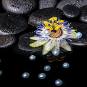 Spa still life of passiflora flower on zen basalt stones with dr — Stock Photo