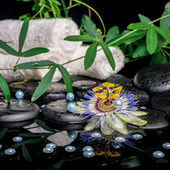 Spa concept of passiflora flower, branches, towels, zen basalt s — Stock Photo