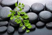 Green twig Adiantum fern on zen basalt stones with dew, beautifu — Stock Photo