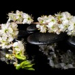 Spa background of zen stones, blooming twig of plum with reflect — Stock Photo #65463723