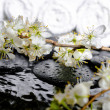 Spa background of zen stones, blooming twig plum, white towels w — Stock Photo #65463727
