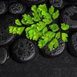 Beautiful spa concept of green twig Adiantum fern on zen basalt  — Stock Photo #65464595