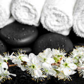 Spa background of zen stones, blooming twig plum, white towels, — Stock Photo