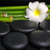 Beautiful spa concept of zen basalt stones, white flower frangip — Stock Photo