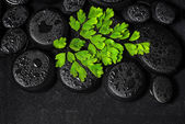 Beautiful spa concept of green twig Adiantum fern on zen basalt  — Stock Photo