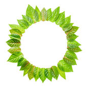 Round frame of fresh green leaves is isolated on white backgroun — Stock Photo