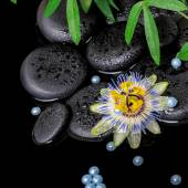 Spa concept of passiflora flower, green  branches,  zen basalt s — Stock Photo