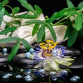 Spa setting of passiflora flower, branches, towels, zen basalt s — Stock Photo