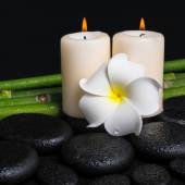Spa concept of zen basalt stones, white flower frangipani, candl — Stock Photo