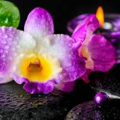 Spa concept of orchid flower, zen basalt stones with drops, lila — Stock Photo