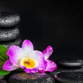 Spa concept of orchid flower, green leaf, pyramid zen basalt sto — Stock Photo
