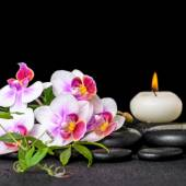 Beautiful spa still life of purple orchid phalaenopsis, green tw — Stock Photo