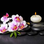 Beautiful spa still life of purple orchid phalaenopsis, green le — Stock Photo