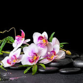 Beautiful spa still life of purple orchid phalaenopsis and green — Stock Photo