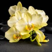 Beautiful spa concept of yellow orchid phalaenopsis on black zen — Stock Photo