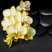 Beautiful spa still life of yellow orchid phalaenopsis on black  — Stock Photo