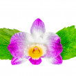 Composition of dendrobium flower and hibiscus green leaves is is — Stock Photo #69531525