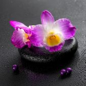 Spa concept of purple orchid dendrobium with dew and pearl beads — Stock Photo