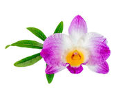 Dendrobium flower and leaf passionflower is isolated on white ba — Stock Photo