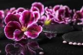 Beautiful spa background of geranium flower, beads and black zen — Stock Photo