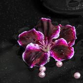 Beautiful spa concept of geranium flower, beads and black zen st — Stock Photo