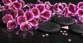 Beautiful spa concept of blooming dark purple geranium flower an — Stock Photo