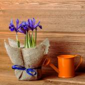 Iris flowers in burlap and water can on wooden background, Insta — Stock Photo