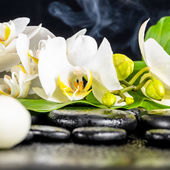 Beautiful spa concept of white orchid flower, phalaenopsis, gree — Stock Photo